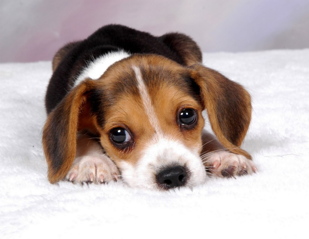 Darwin's Puppy